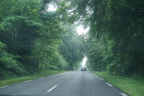 フォンテーヌブローの道.jpg